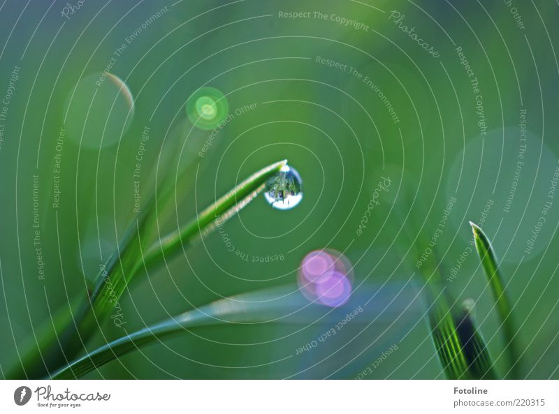 enchanted Environment Nature Plant Elements Water Drops of water Grass Bright Wet Natural Green Blade of grass Colour photo Multicoloured Exterior shot Close-up