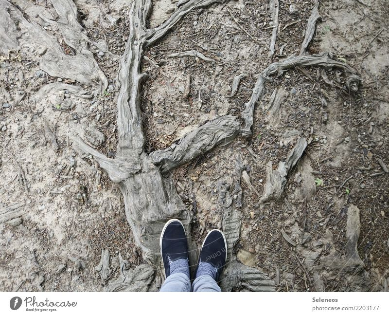 wrong track Trip Feet Environment Nature Plant Tree Root Footwear Wood Old Abstract Woodground Forest Colour photo Exterior shot