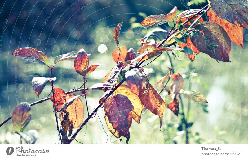 Nature Plant Leaf Autumn Emotions Brown Bushes Pond Shriveled Autumn leaves Autumnal Autumnal colours