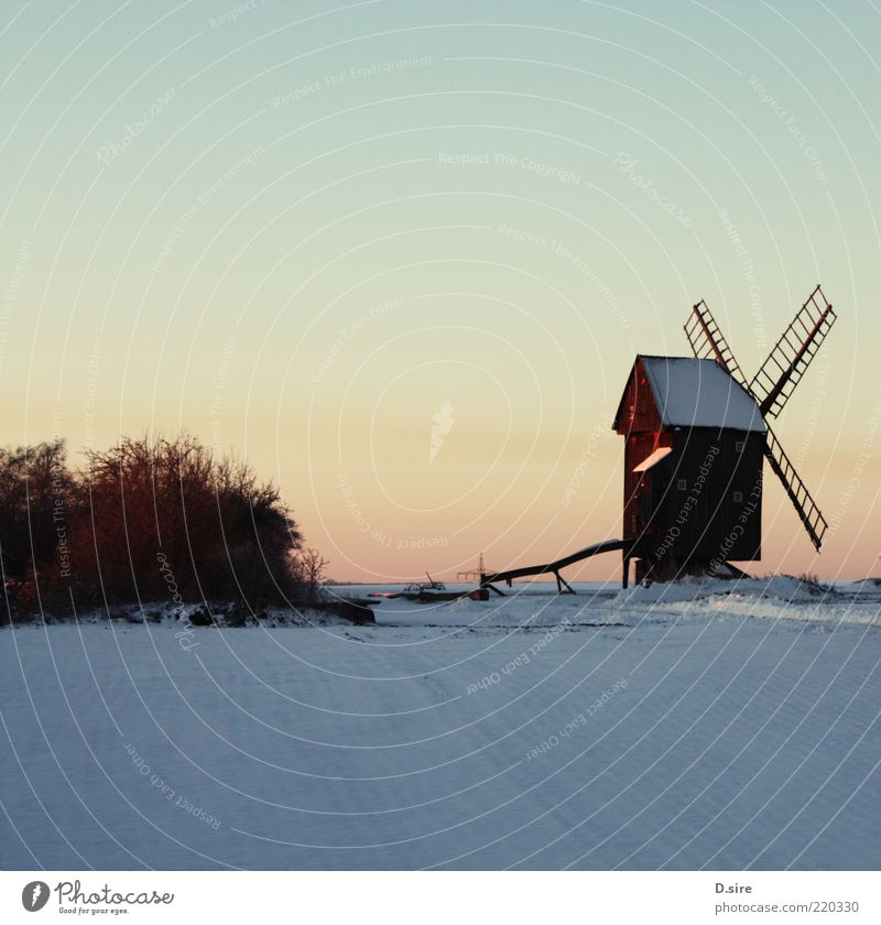 Bock windmill in the snow Snow Nature Landscape Air Cloudless sky Winter Beautiful weather Village bock windmill Tourist Attraction Old Authentic Sharp-edged