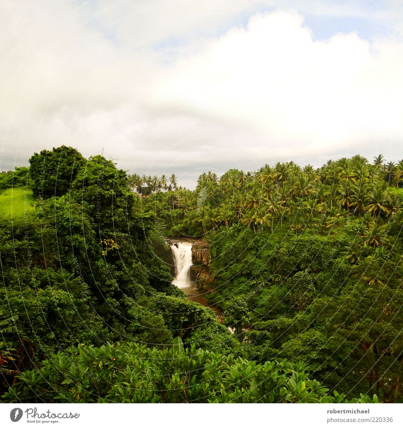 Nature Water Sun Green Plant Summer Clouds Far-off places Forest Mountain Freedom Landscape Environment River Virgin forest Palm tree