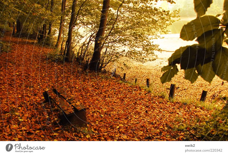 people's bank Environment Nature Plant Autumn Tree Leaf Twigs and branches Autumn leaves Park Forest Pond Lake Seating Bench Park bench Wood To dry up Yellow