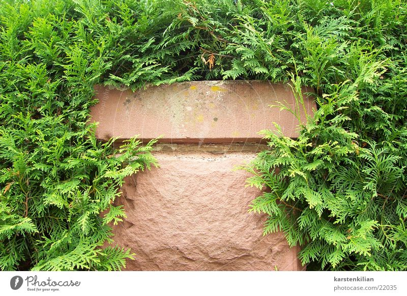 Green Plant Stone Wall (barrier) Muddled Pole Sandstone
