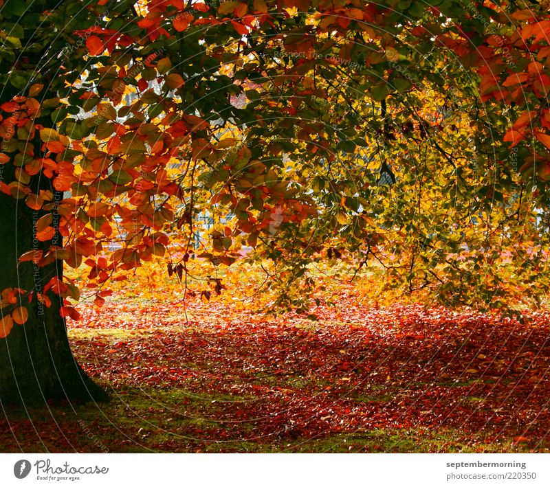autumn magic Autumn Tree Brown Yellow Green Red Colour photo Exterior shot Deserted Autumn leaves Autumnal colours Leaf Tree trunk Day