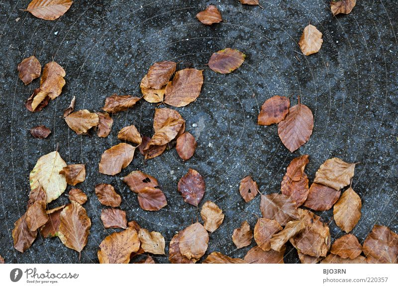 The state of the nation... Environment Nature Plant Autumn Leaf Lie Old Dirty Natural Blue Brown Gray Decline Transience Attachment Ground Detail Decompose