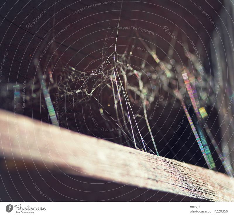 spider web Network Attachment Spider's web Prismatic colors Multicoloured Wood Old Colour photo Exterior shot Close-up Detail Macro (Extreme close-up) Day Light