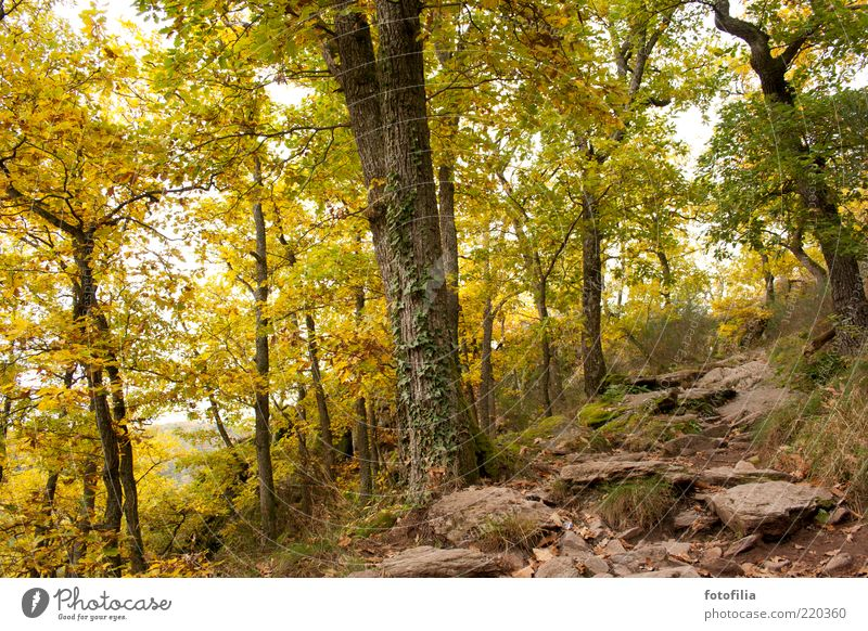 autumn fairytale forest Vacation & Travel Trip Mountain Environment Nature Landscape Earth Autumn Beautiful weather Plant Tree Grass Forest Hill