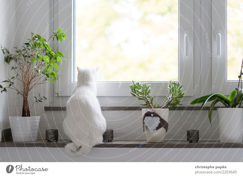 cat cinema Living or residing Flat (apartment) Room Living room Animal Pet Cat 1 Observe Relaxation Looking Sit Cute View from a window White Window board