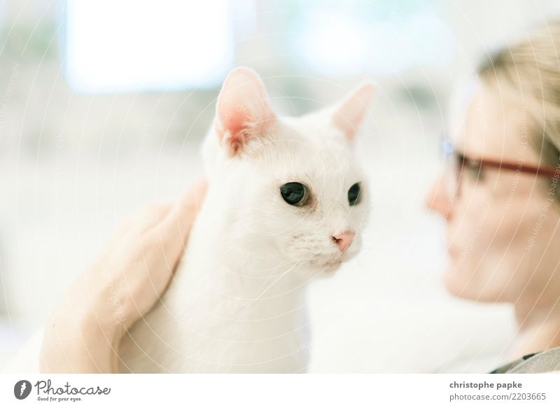look past each other Living or residing Flat (apartment) Feminine Woman Adults 1 Human being 30 - 45 years Animal Pet Cat Animal face Dream Cute Contentment