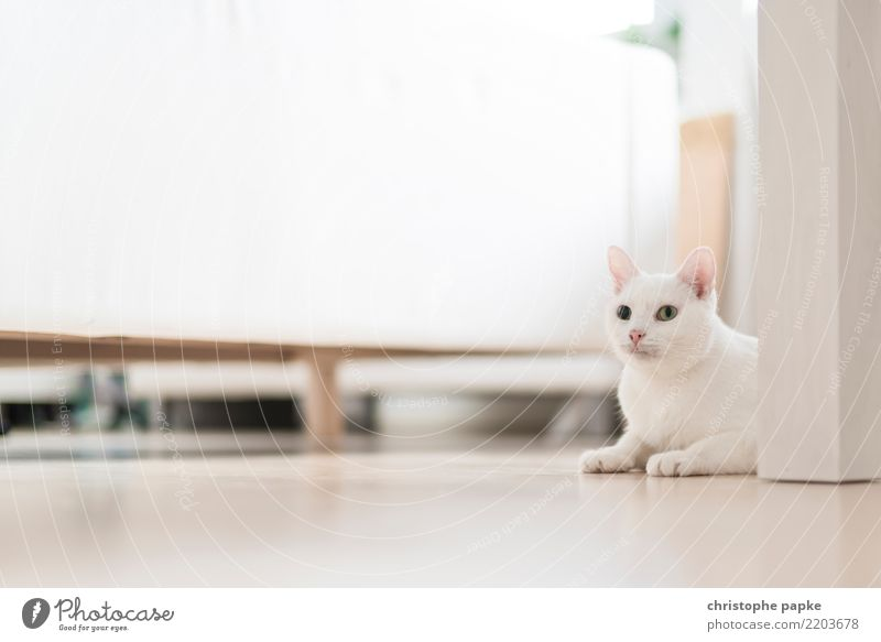 perfectly camouflaged Living or residing Flat (apartment) Room Living room Animal Pet Cat 1 Relaxation Lie Looking Curiosity Cute White Love of animals