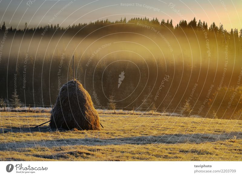 haystack in mountain rural area Beautiful Sun Mountain Environment Nature Landscape Sky Autumn Weather Warmth Tree Meadow Forest Hill Bright Natural Serene