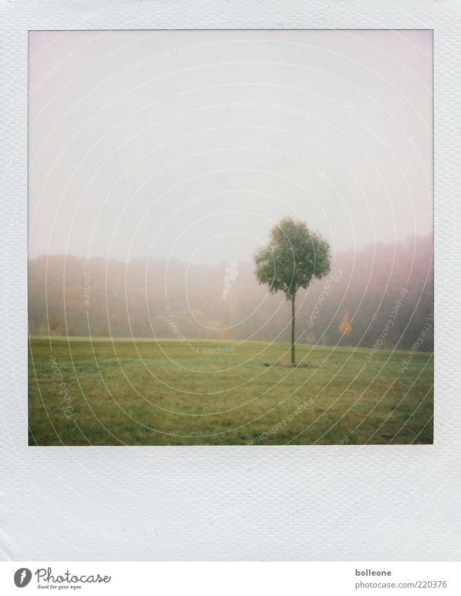 Nature Tree Green Plant Loneliness Meadow Autumn Grass Park Landscape Weather Environment Thin Polaroid Early fall Autumnal weather