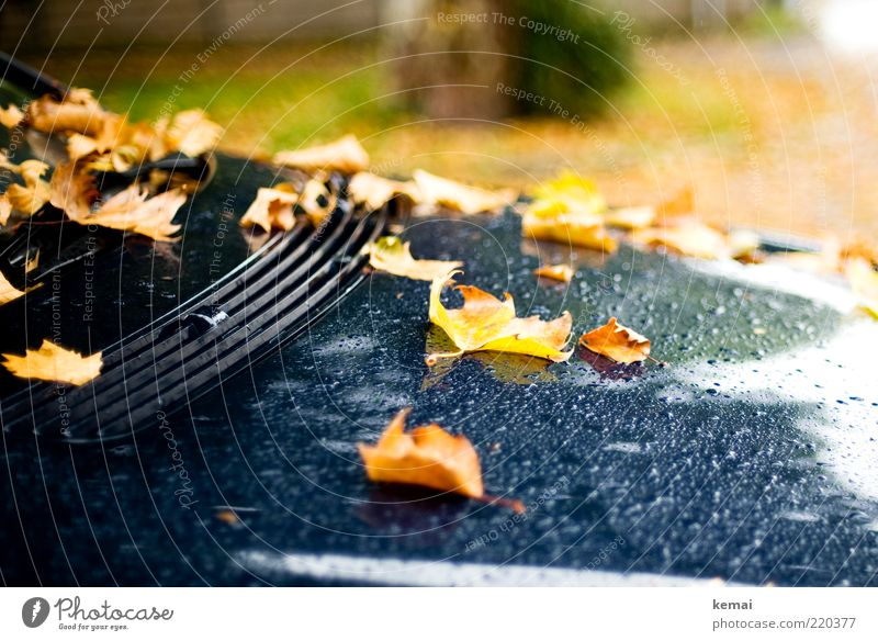Nature Water Plant Leaf Black Yellow Cold Autumn Car Rain Environment Wet Drops of water Lie Climate