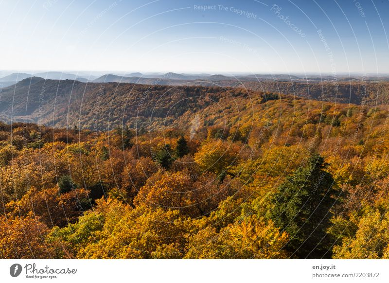 Palatinate Forest Nature Landscape Cloudless sky Horizon Autumn Hill Infinity Blue Yellow Gold Orange Loneliness Relaxation Idyll Climate Calm Environment