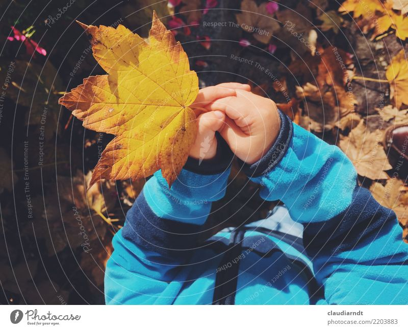 Child Human being Nature Youth (Young adults) Plant Young woman Blue Beautiful Tree Hand Leaf Yellow Environment Autumn Garden Brown