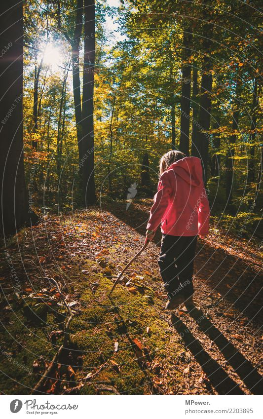 autumn walk Playing Human being Child Girl 1 Environment Nature Beautiful weather Tree Looking Hiking Autumn Discover Forest Footpath Stick Colour photo