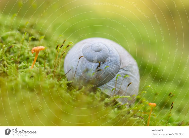 Nature Plant Green Loneliness Animal Calm Forest Autumn Gray Earth Growth Idyll Round Soft Protection Discover