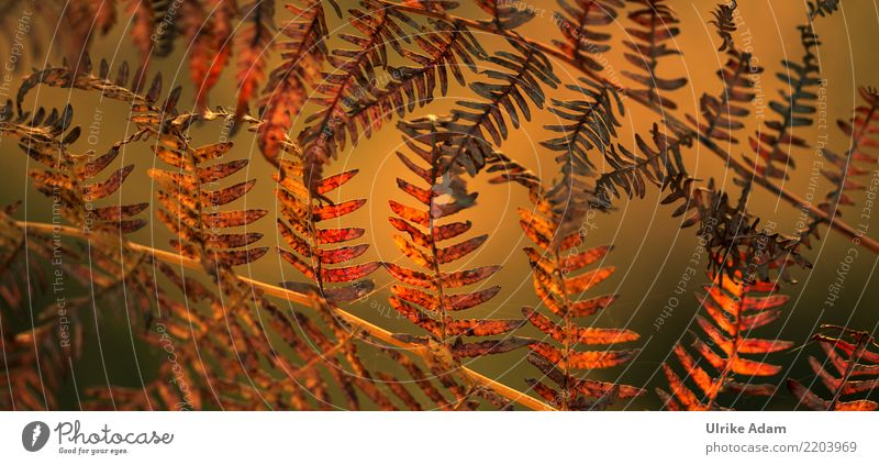 Fern in autumn Nature Plant Autumn Leaf Rachis Structures and shapes Pattern Meadow Field Forest Bog Marsh Faded To dry up Warmth Green Orange Transience