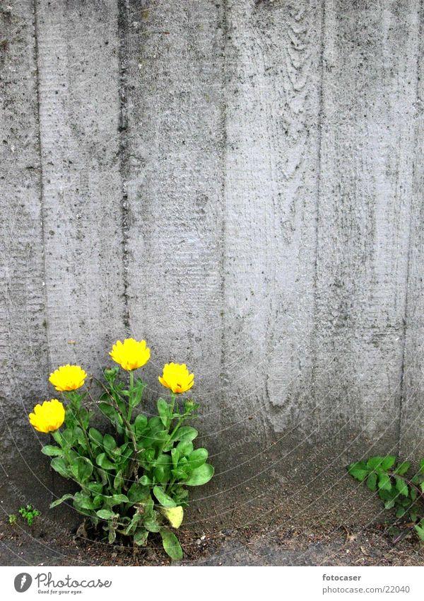 Green Yellow Concrete Dandelion Niche