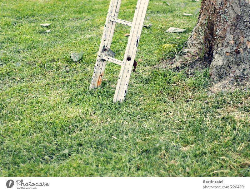 top of page Environment Nature Grass Garden Meadow Green Ladder Tree bark Rung Go up Colour photo Exterior shot Copy Space bottom Day Shallow depth of field