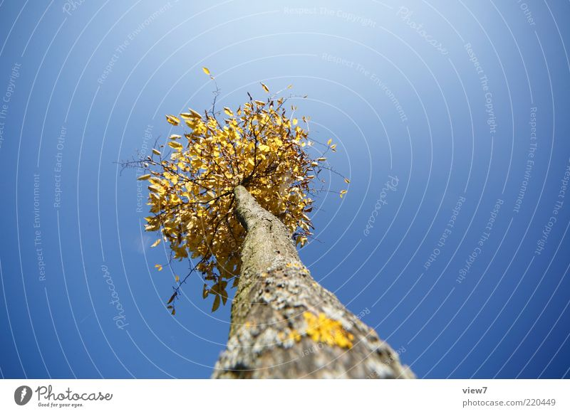 Nature Sky Tree Blue Plant Leaf Above Small Environment Gold Tall Fresh Perspective Esthetic Growth Authentic