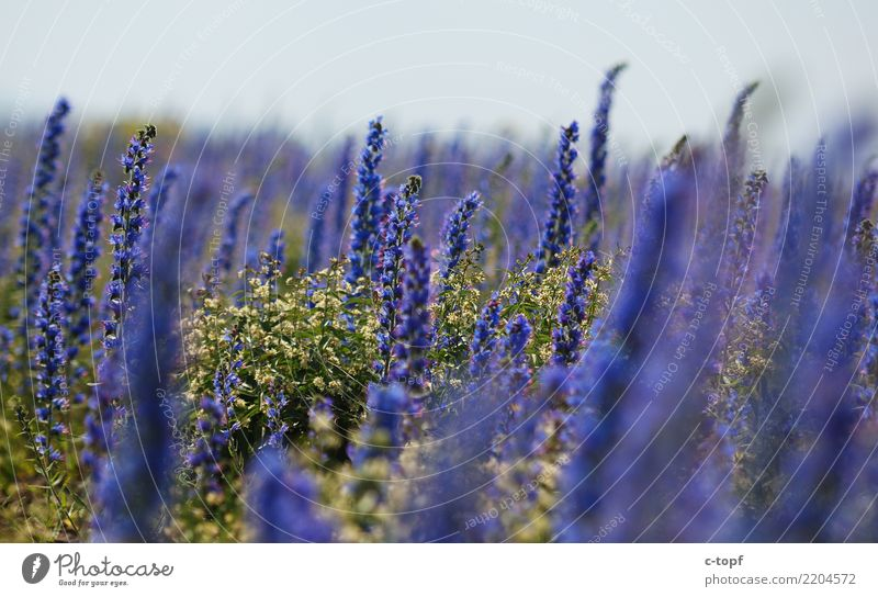 Reign of Purple Environment Nature Landscape Plant Sun Sunlight Summer Beautiful weather Flower Grass Blossom Meadow Lakeside Happy Happiness Warm-heartedness