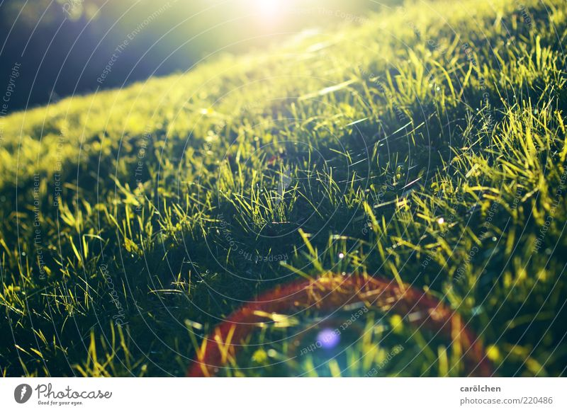 a light for kneeling down Nature Sunrise Sunset Sunlight Beautiful weather Grass Meadow Yellow Green Lens flare Low Slope Diagonal Colour photo Multicoloured