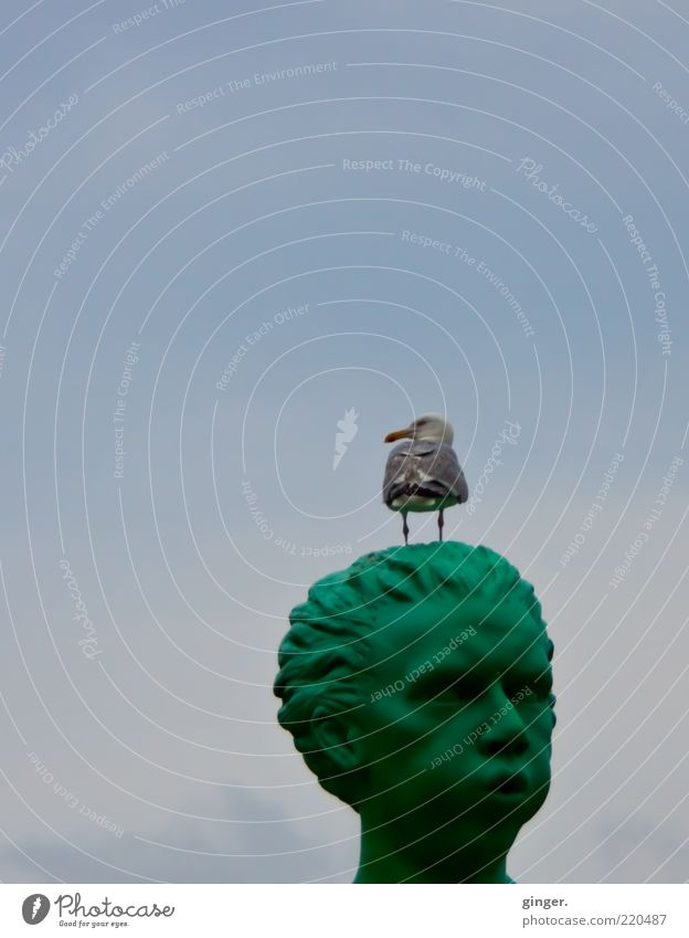 Blos d'r jet! Animal Wild animal Bird 1 Stand Sky Statue Head Seagull Blow Green Above Clouds Face Beak Copy Space top Sculpture Sculptural Whimsical Funny