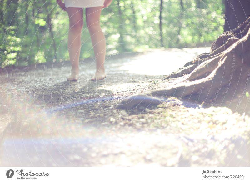 Mielikki 1 Human being Nature Summer Forest Stand Brown Green Legs Root Sunlight Barefoot Loneliness Footpath Woman's leg Mini skirt Mini dress Detail