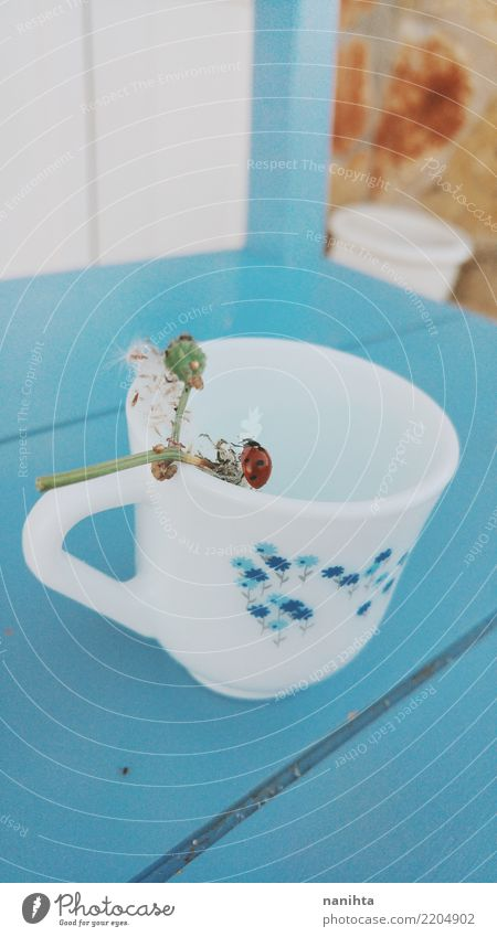 Tea cup with a ladybug Nature Plant Blue Beautiful White Flower Red Animal Autumn Spring Wood Small Contentment Wild animal Authentic Fantastic