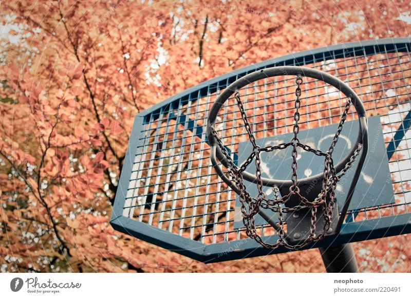 backyard dream Basketball Basketball basket Sporting Complex Autumn Tree Leaf canopy Autumn leaves Blue Yellow Red Colour photo Detail Deserted Copy Space left