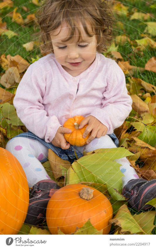 Adorable girl todler embracing pumpkins on an autumn field Nature Leaf Joy Forest Yellow Autumn Natural Garden Bright Park Dream Smiling Happiness Cute Seasons