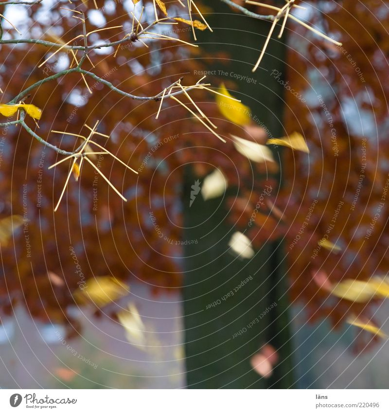 Nature Tree Plant Leaf Yellow Autumn Brown Wind Weather Environment Flying Change To fall Transience Branch Gale