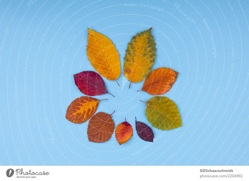 Nature Colour Beautiful Green Red Leaf Warmth Yellow Autumn Natural Art Exceptional Brown Orange Decoration Esthetic