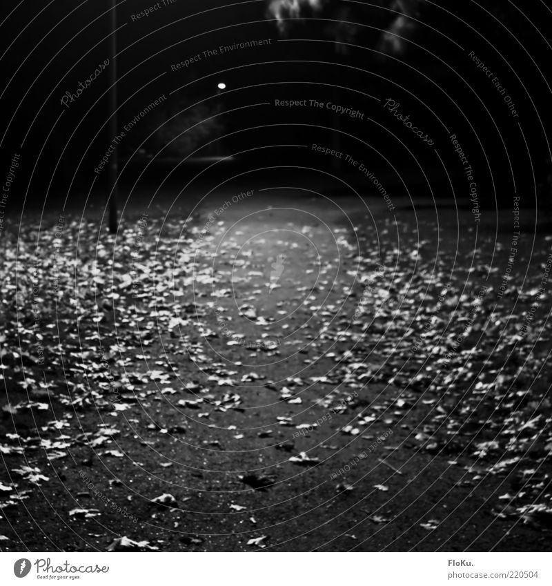 At night in the park Environment Nature Autumn Leaf Park Gray Black White Moody Loneliness Lanes & trails Gravel path Long exposure Black & white photo