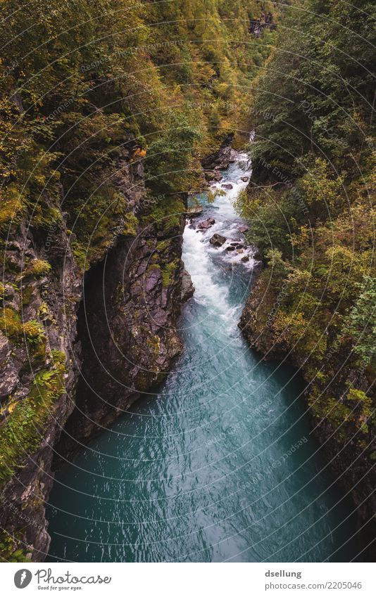 Ripping river through a mountain range in autumn Vacation & Travel Trip Adventure Far-off places Expedition Mountain Hiking Environment Nature Landscape