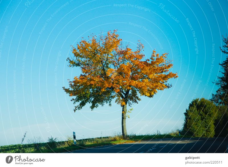 peripheral phenomenon Environment Landscape Sky Cloudless sky Autumn Plant Tree Country road Blue Unwavering Uniqueness Deciduous tree Leaf Multicoloured Edge