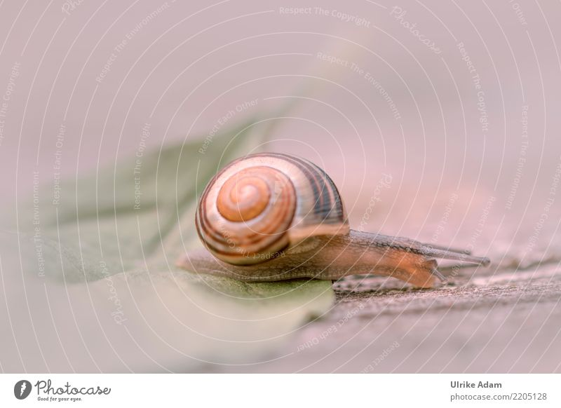 snail Nature Animal Spring Summer Autumn Leaf Snail Mollusk Feeler Snail shell 1 Brown Love of animals Slowly Creep Crawl Wood Structures and shapes Soft Blur