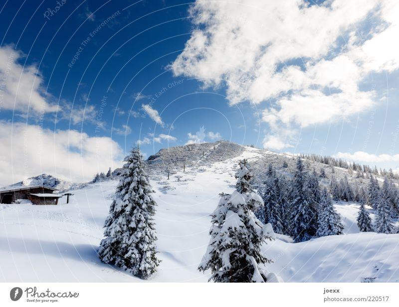 sermon chair Nature Landscape Sky Winter Snow Tree Alps Mountain Hut Cold Blue White Calm Bavaria Latten Mountains Berchtesgaden Alpes Colour photo