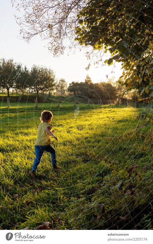 Autumn days like these... Leisure and hobbies Playing Child Infancy 1 Human being Nature Beautiful weather Tree Meadow Short-haired Wood Movement Discover