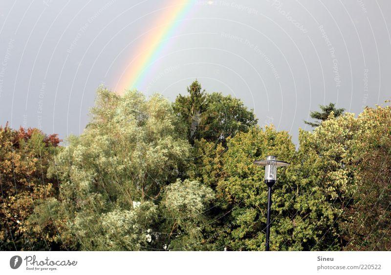 Nature Sky Tree Leaf Park Observe Illuminate Lantern To enjoy Treetop Street lighting Rainbow Enthusiasm Twigs and branches Lamp post Natural phenomenon