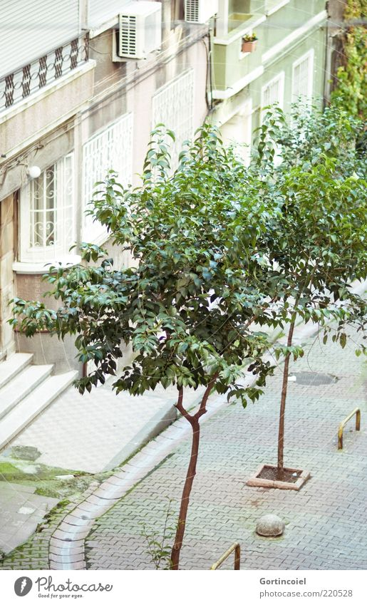 Tree City Green House (Residential Structure) Street Facade Quarter Turkey Istanbul Residential area Sidestreet Apartment Building