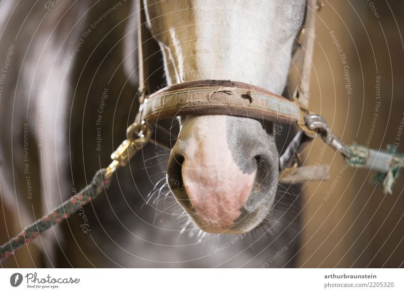Horse in stable with harness Food Meat Horse's head Crockery Leisure and hobbies Ride Equestrian sports Livestock breeding Agriculture Forestry Animal