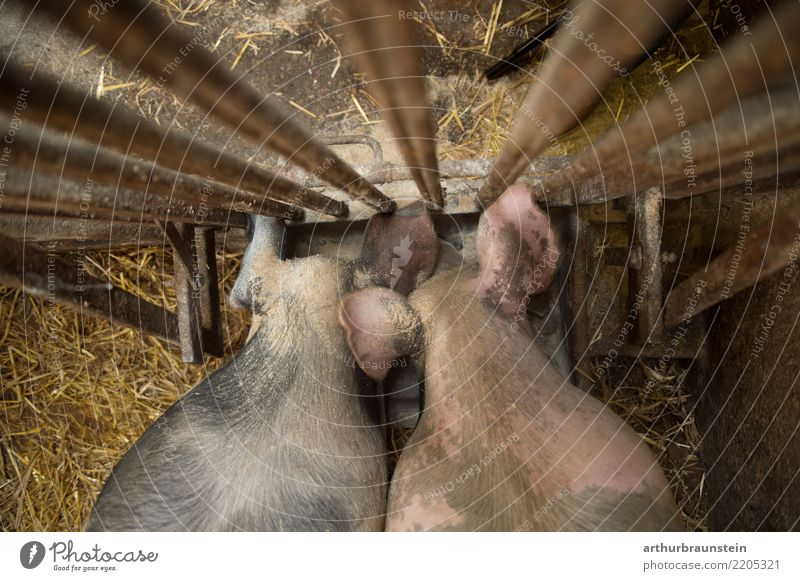 Animal Food Work and employment Metal Pair of animals Nutrition Stand Agriculture Profession Farm Economy Meat To feed Grating Farmer Forestry