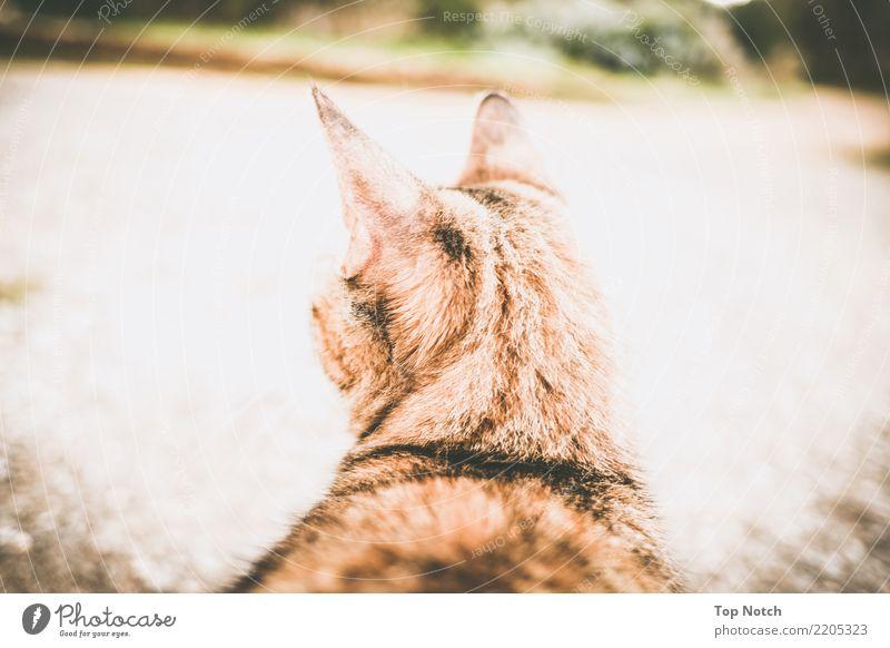 the cat Cat 1 Animal Contentment Serene Patient Calm Far-off places Colour photo Exterior shot Neutral Background Day Contrast Blur Central perspective