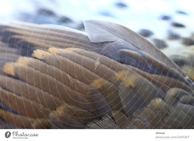 cushioned Wild animal Dead animal Bird Wing Throstle Feather Creepy Beautiful Uniqueness Broken Near Brown Emotions Compassion Pain Wanderlust Fear of flying