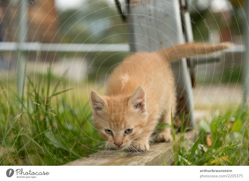Cat Nature Plant Summer Animal Baby animal Environment Healthy Grass Garden Tourism Going Authentic Curiosity Pet Animal face
