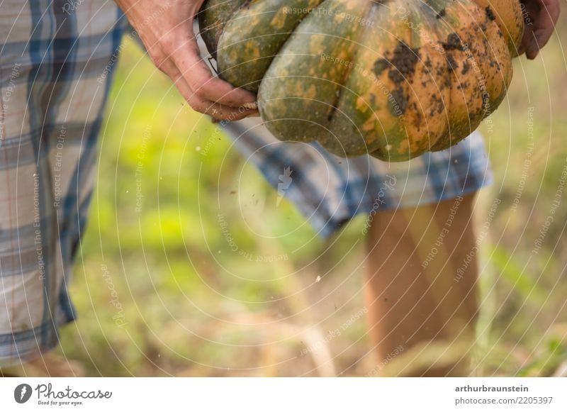 Fresh pumpkin harvested by hand Food Vegetable Pumpkin Pumpkin plants Pumpkin field Nutrition Organic produce Vegetarian diet Healthy Eating Leisure and hobbies