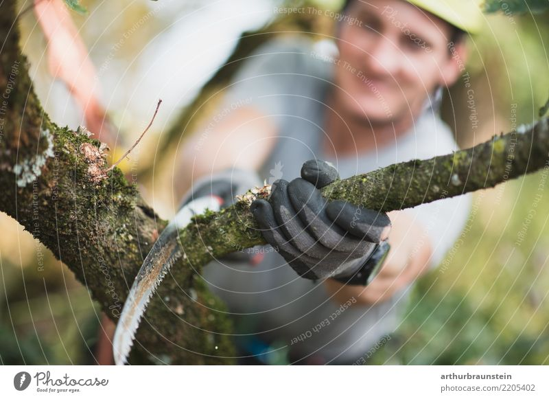 Arborist cuts off branch Leisure and hobbies Garden Climbing Mountaineering Profession Tree felling Forester Farmer Agriculture Forestry Human being Masculine