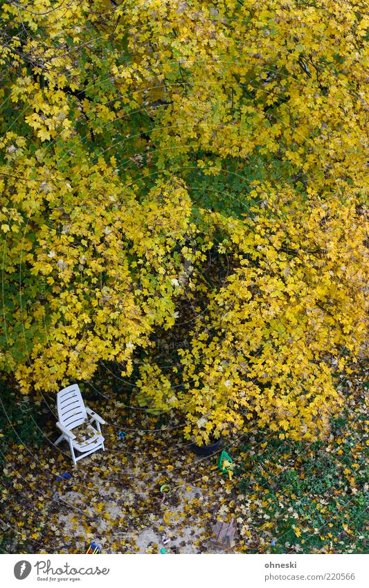 Tree Leaf Loneliness Meadow Autumn Garden Chair Transience Treetop Deckchair Autumn leaves Bird's-eye view Autumnal colours Garden chair Plastic chair